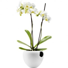 Orchidee pot wit